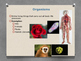 Organization of Living Things Powerpoint