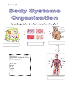 Levels of organization:  Cells, tissues, organs, and systems