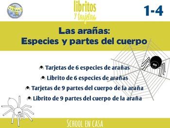 Spiders in Spanish | Especies y Partes de la araña {Librit