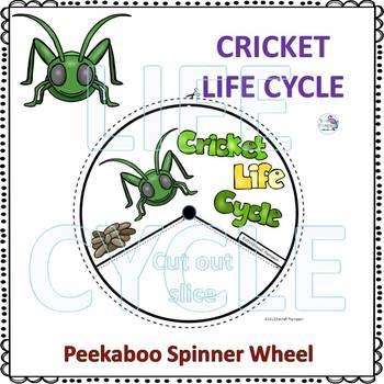 Cricket Life Cycle (Peekaboo Spinner Wheel)