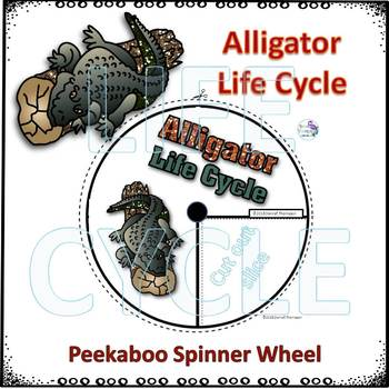 Alligator Life Cycle (Peekaboo Spinner Wheel)