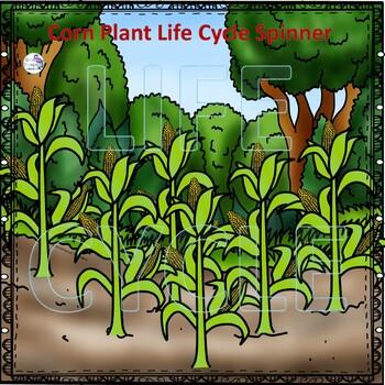 Corn Life Cycle (Peekaboo Spinner Wheel)