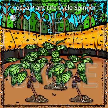 Cocoa Plant Life Cycle (Peekaboo Spinner Wheel)