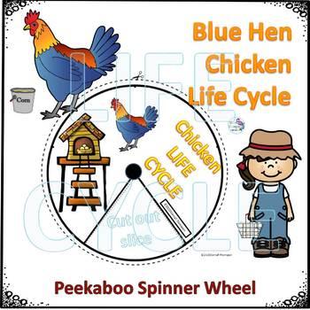 Chicken Life Cycle (Peekaboo Spinner Wheel)
