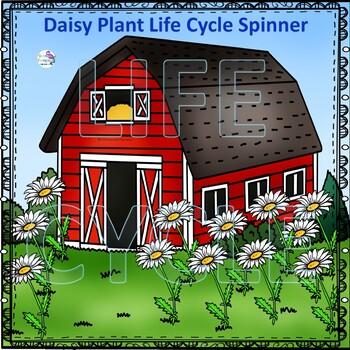 Daisy Life Cycle (Peekaboo Spinner Wheel)