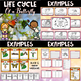 Life Cycle Bundle ~ 4 Life Cycle Units.