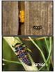 Life Cycle Bundle [Frog, Ladybug, Butterfly, Chicken]