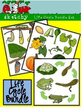 Life Cycle Bundle Set - Pumpkin / Butterfly / Frog 300dpi
