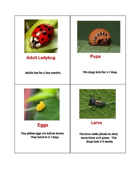 Life Cycle Cards