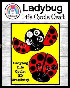 Life Cycle Craft: 3D Ladybug