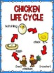 Life Cycle Sequencing Interactive Notebook Activities & Mo