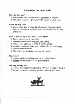 Life Cycle of Deer Study Guide