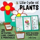 Life Cycle of Plants {20 Activities, Printables & Foldable Flower Book}