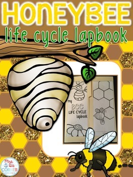 Life Cycle of a Bee Lapbook {with 12 foldables} Honeybee L