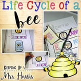 Life Cycle of a Bee