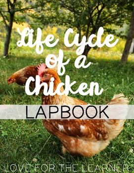 Life Cycle of a Chicken Lapbook