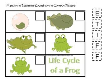 Life Cycle of a Frog Beginning Sound preschool biology pri