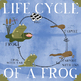 Life Cycle of a Frog Clip Art, Matching Game & Poster Bundle