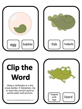 Life Cycle of a Frog Word Clip it Cards preschool biology