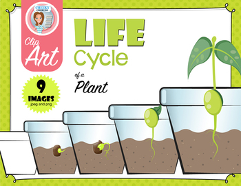 Life Cycle of a Plant - Clip Art