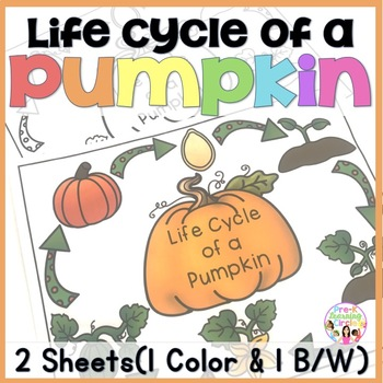 (FREE) Life Cycle of a Pumpkin