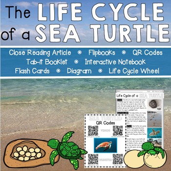 Life Cycle of a Sea Turtle