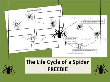 Life Cycle of a Spider Freebie