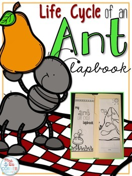 Life Cycle of an Ant Lapbook {with 12 foldables} Ant Life