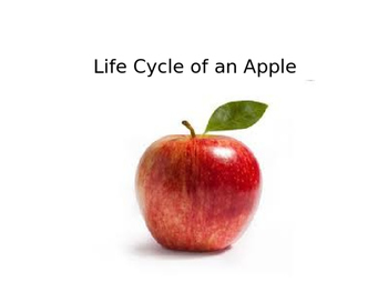 Life Cycle of an Apple-PowerPoint