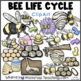Life Cycles Bundle 1 (4 Sets) Whimsy Workshop Teaching