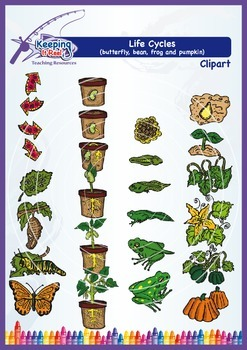 Life Cycles Clipart (butterfly, bean plant, frog and pumpkin)