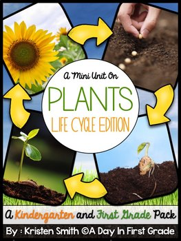 Life Cycles- Plant Edition