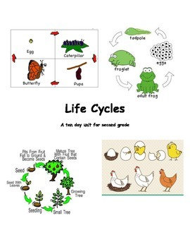 Life Cycles Unit Plan