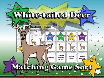 White-tailed Deer Life Cycle (Fawn, Yearling, Buck and Doe