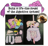 Life Size Digestive System Model Printable for Review or Projects