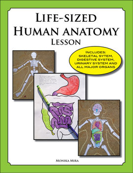 Life Sized Human Anatomy Lesson including Skeletal and Dig