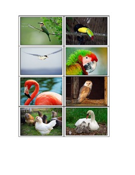 Life Skills: Birds vs. Mammals