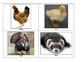 Life Skills: Domestic Animals