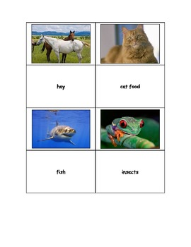 Life Skills: What do Animals Eat?