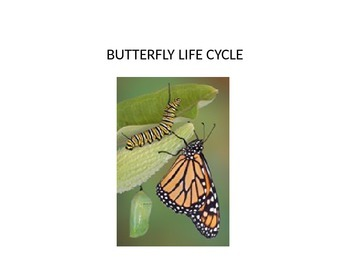 Life cycle of a butterfly power point including metamorphi