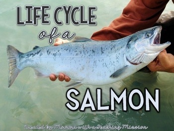 Life cycles : Life of a Salmon