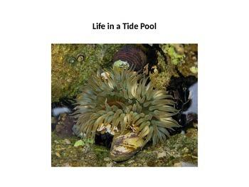 Life in a Tidepool
