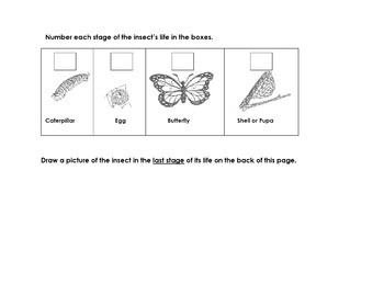 Animal Butterfly Life Cycle Read Science Worksheet 6 Seque