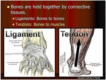 Ligament or Tendon Lesson Quiz