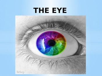 Light: The Eye- How we see...step by step