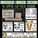 Lightbox Bundle: (Regular, Mini, and Lightbox Shelf) - 40