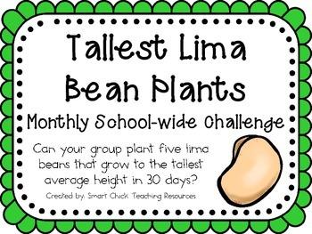 Lima Bean Plants ~ Monthly School-wide Science Challenge ~ STEM