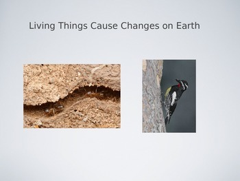Living Things Cause Changes on Earth