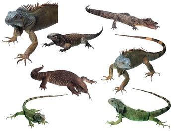 Lizard Bulletin Board - Class Pets