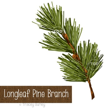 Longleaf Pine Branch - holiday clip art Printable Tracey G